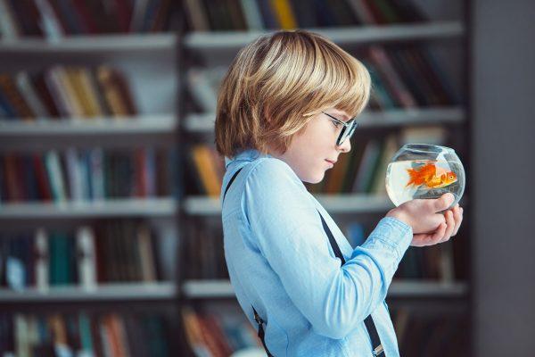 Apprendre à son enfant comment nourrir un poisson rouge